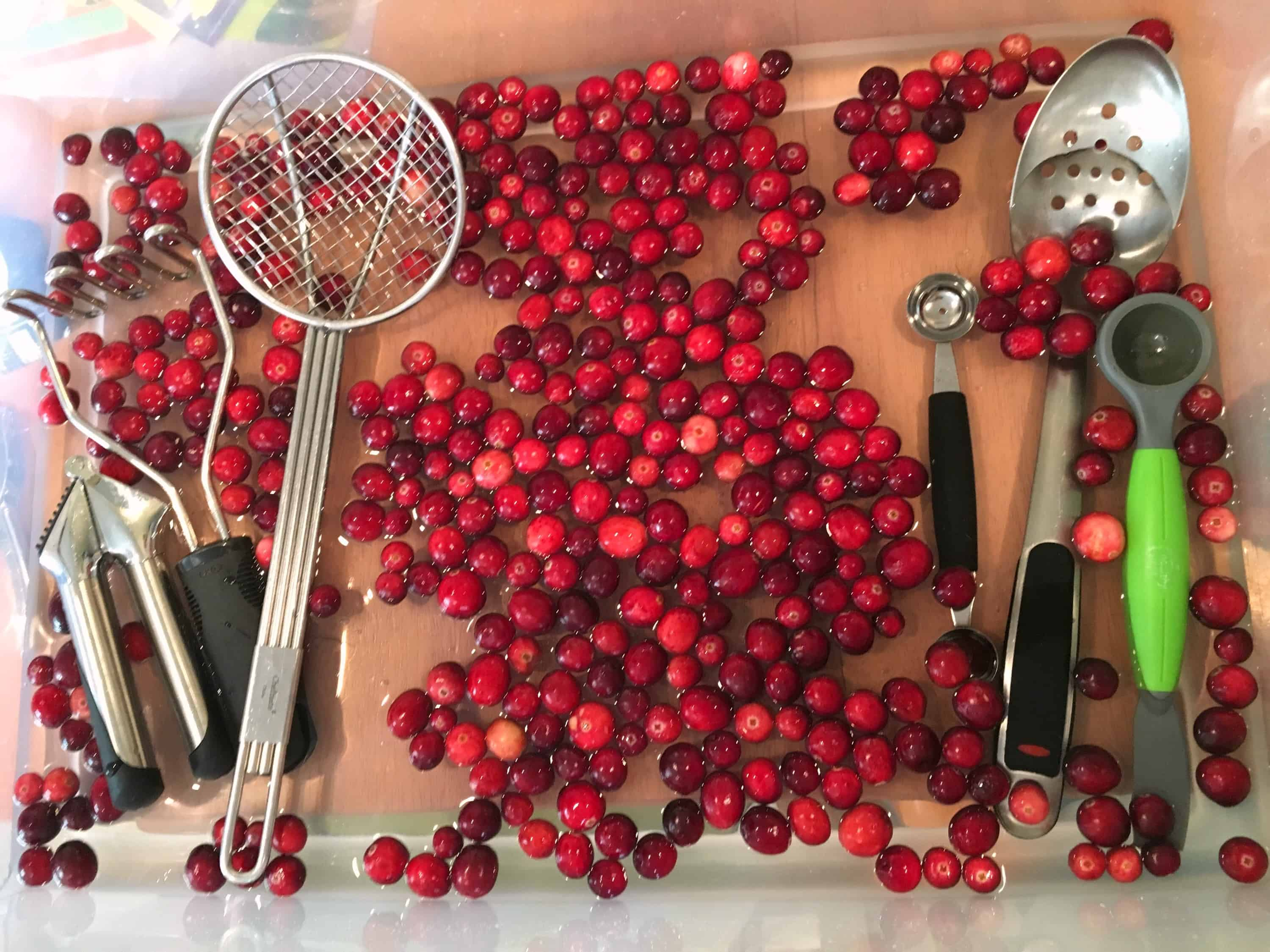 Make an indoor cranberry bog for some simple science and sensory play with kids! A hands-on activity like this will leave an impression.