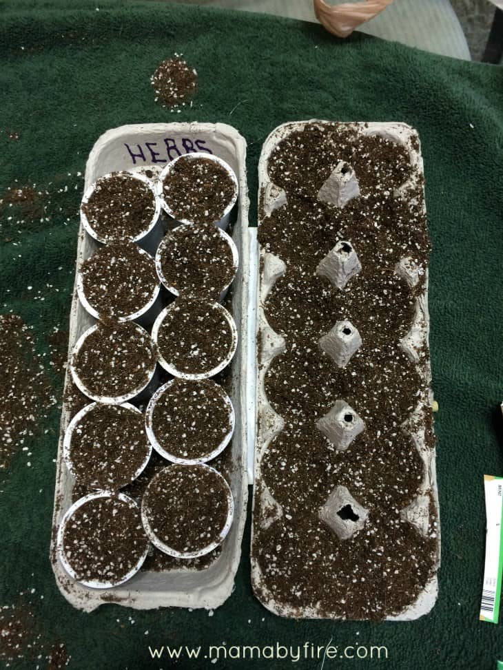 gardening-with-the-toddler-dirt-in-egg-carton