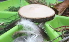 Build a Nest STEM Challenge for Kids