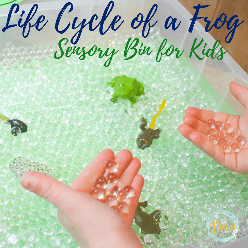 This sensory bin displays the life cycle of a frog for kids. Containing water beads that resemble frog eggs, kids can sort, read and learn while playing!