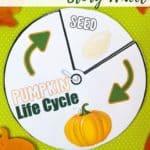 pumpkin_sensory_bin__VIeue