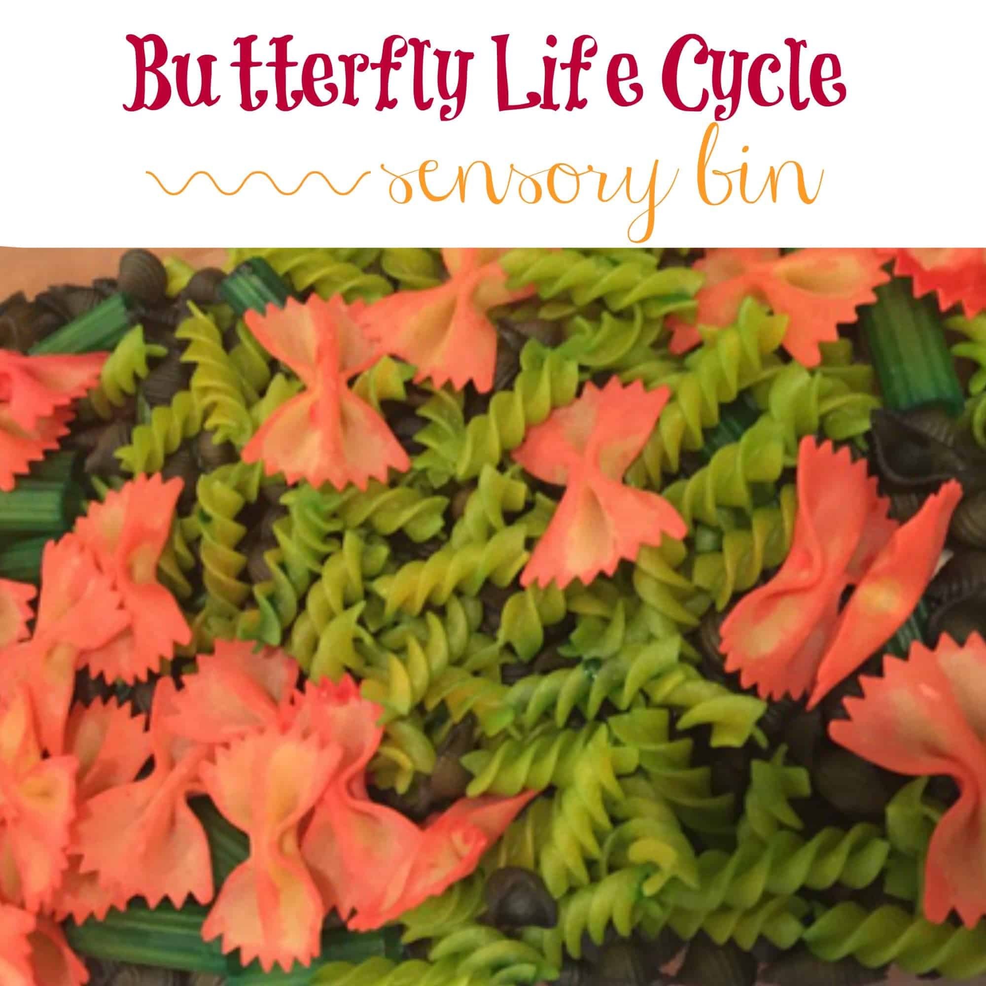 Use pasta shapes to create a super fun and educational butterfly life cycle sensory bin!
