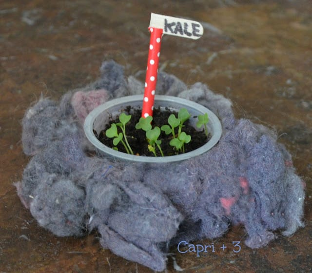 Don't Throw away your dryer lint.Re-purpose it for starting seeds and for potted plants.Green STEM activity for children.