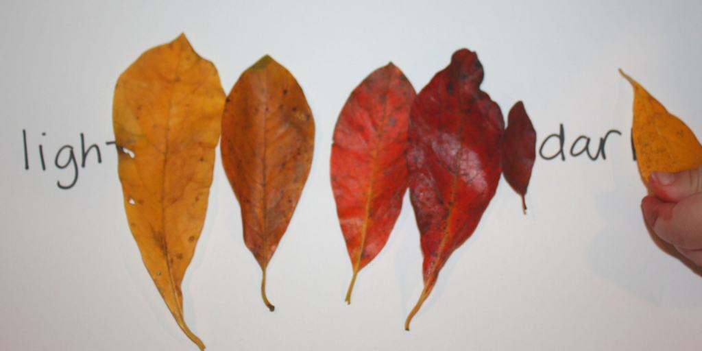 These activities are fun ways to work on basic math skills with fall leaves for preschoolers! Included is color and size sequencing and counting practice!