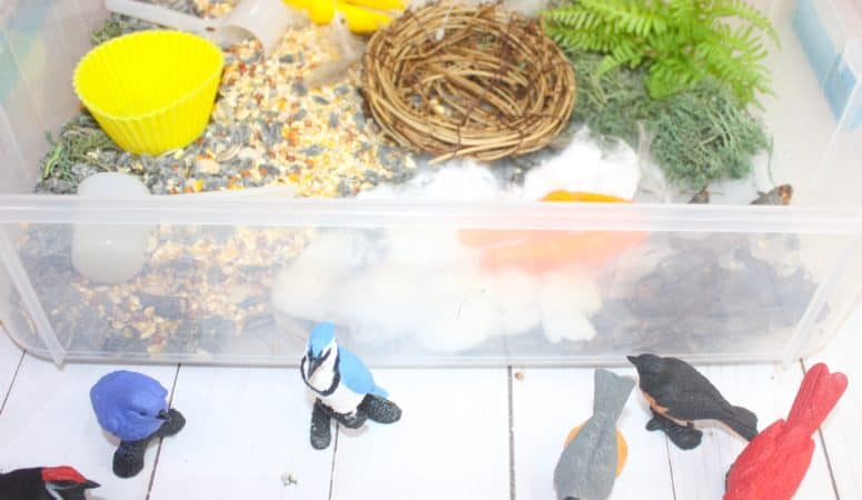 Bird Sensory Bin with a Nest Building Activity