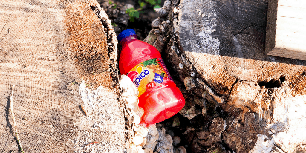 tampico juice bottle hidden in tree trunk
