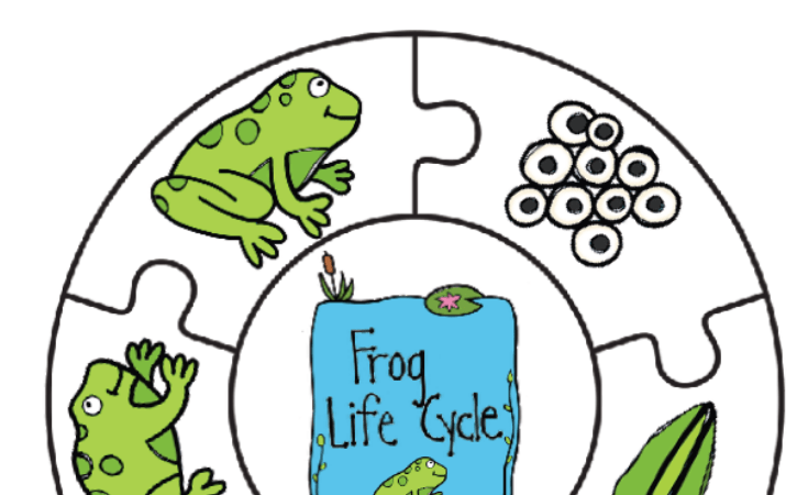 Frog Life Cycle Printable Puzzle