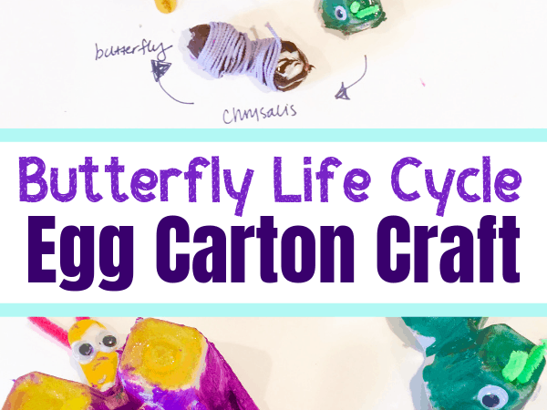 Butterfly Life Cycle Craft from Recycled Egg Cartons