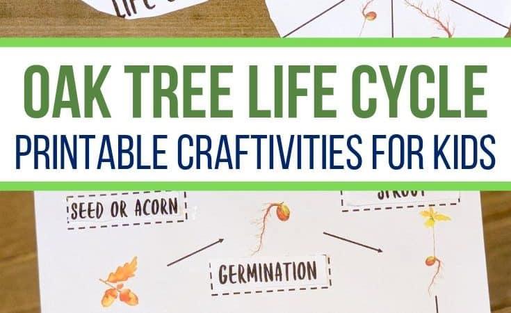 Oak Tree Life Cycle Printable Story Wheel