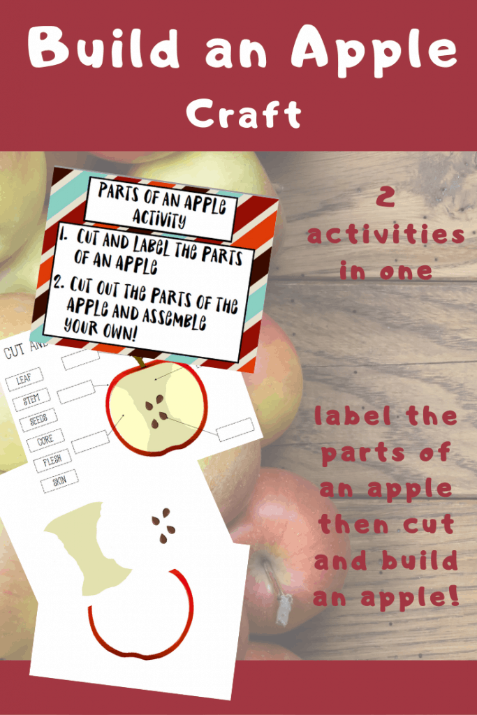 photograph regarding Parts of an Apple Printable named Elements of an Apple Printable Apple Topic Craft - Opinions Against a