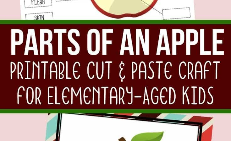 Parts of an Apple Printable Craft